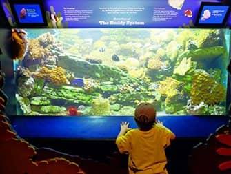 New York Aquarium - Peces