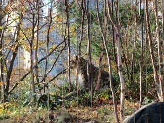 Central Park en Nueva York - Central Park Zoo
