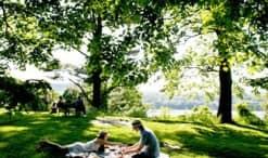 Mejores sitios para hacer picnic en Nueva York
