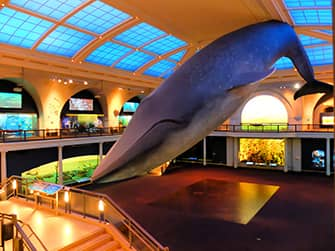 American Museum of Natural History en Nueva York - Vida en el océano