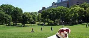 Parques-en-Nueva-York
