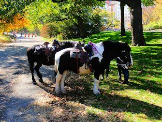 Montar a caballo en Central Park - Caballos